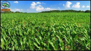 أهمية زراعة المحاصيل الحقلية