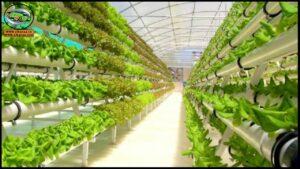 اصول الزراعة المحمية في مصر