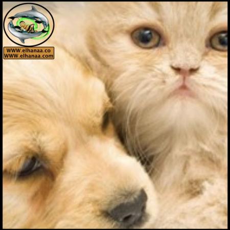 الحيوانات الأليفة ومستلزماتها