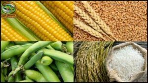 فيديوهات المحاصيل الحقلية