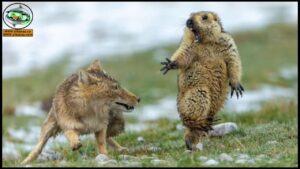 فيديوهات منوعات وطرائف الحيوانات