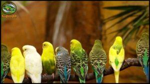 فيديوهات طيور الزينة