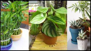 فيديوهات نباتات الزينة
