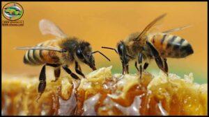 فيديوهات النحل