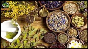 النباتات الطبية والعطرية كنوز مهدرة