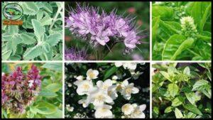 النباتات الطبية والعطرية … فرص استثمارية واعدة