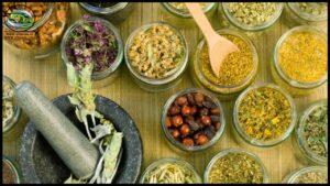زراعه الأعشاب الطبيه والعطريه فى جنوب الوادى … فرص واعده للإستثمار